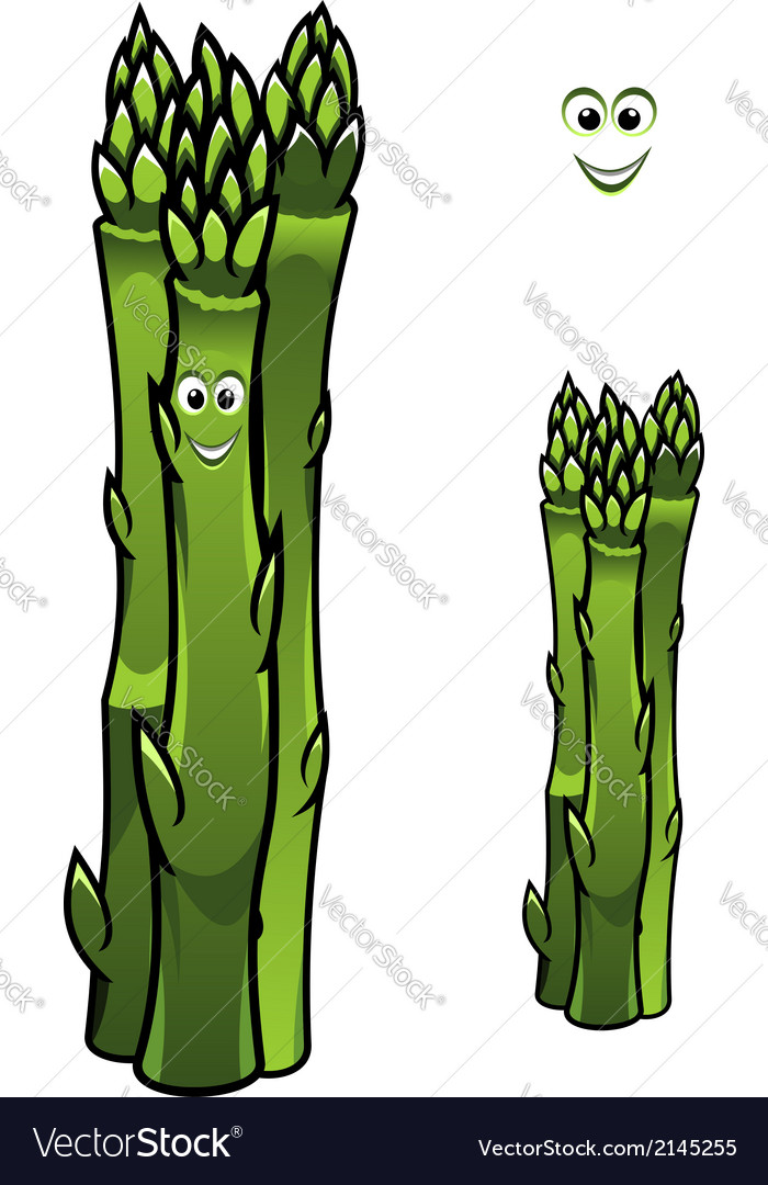 Bunch of fresh green asparagus spears vector | Price: 1 Credit (USD $1)