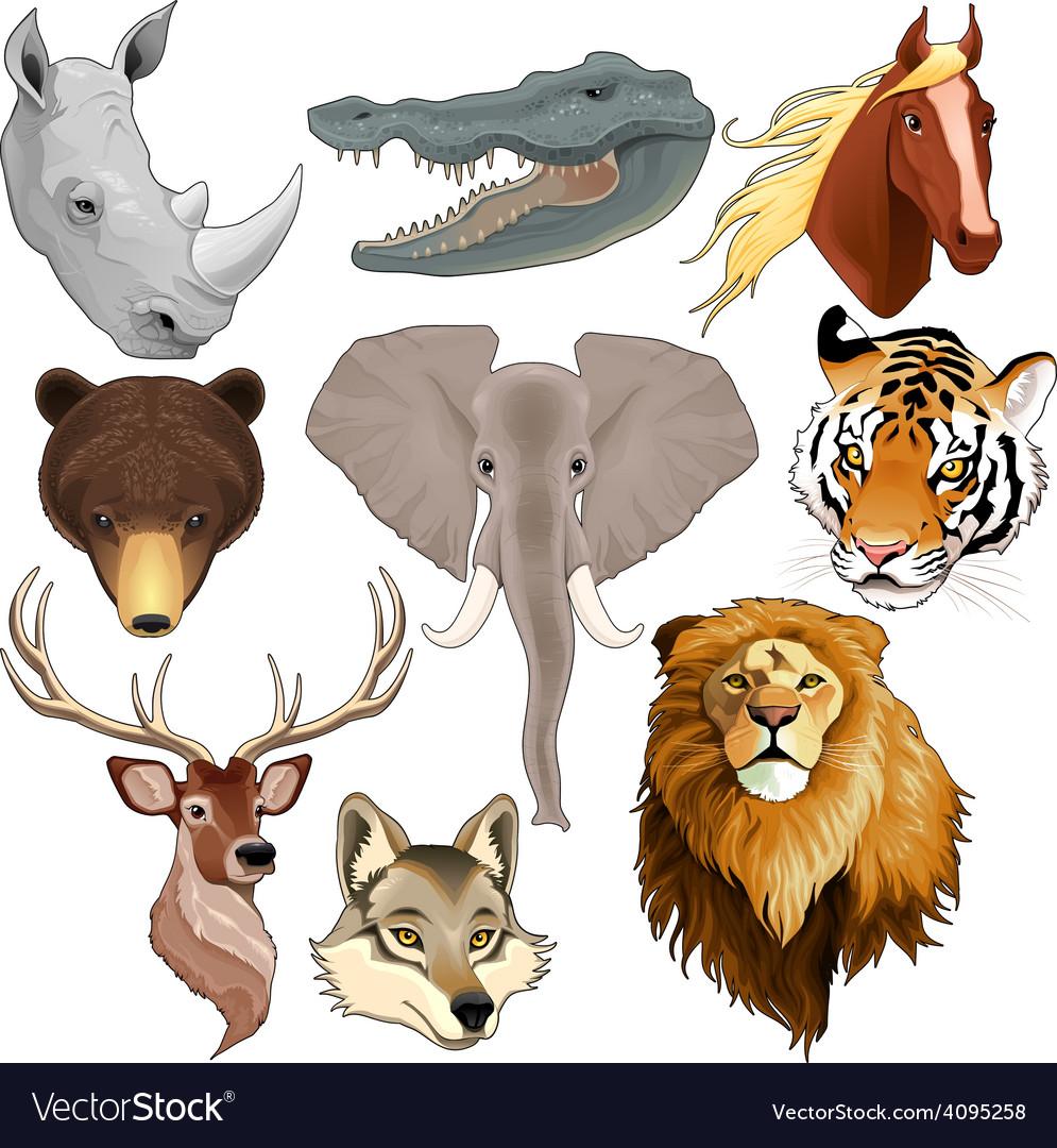 Set of animal heads vector | Price: 3 Credit (USD $3)