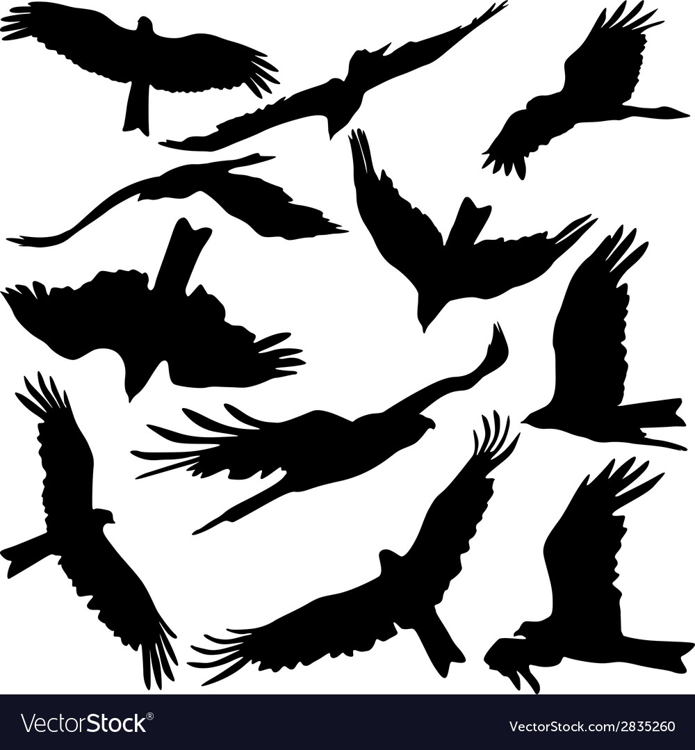 Set black silhouettes of prey eagles on white vector | Price: 1 Credit (USD $1)