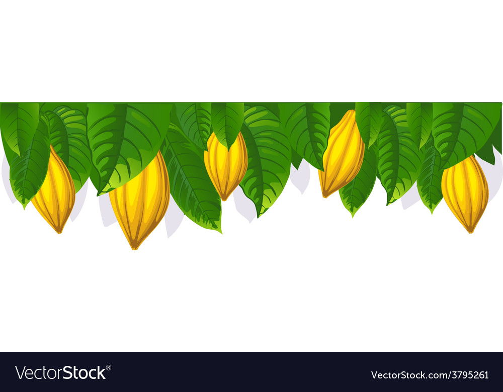 Cocoa pod and leaf - the upper bar- vector | Price: 1 Credit (USD $1)
