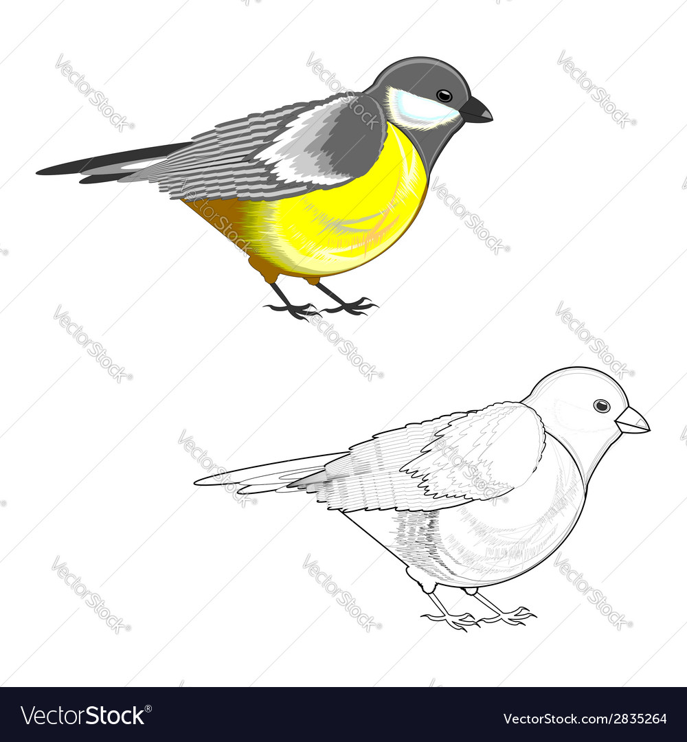A titmouse isolated on a white background vector | Price: 1 Credit (USD $1)