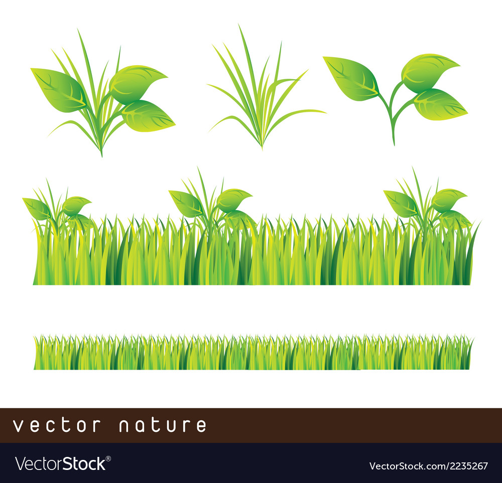 Leaves and grass vector | Price: 1 Credit (USD $1)