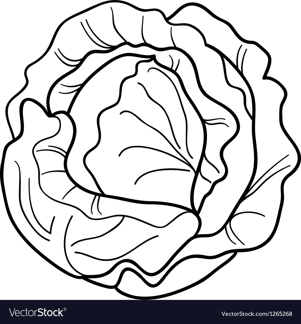 Cabbage vegetable cartoon for coloring book vector | Price: 1 Credit (USD $1)