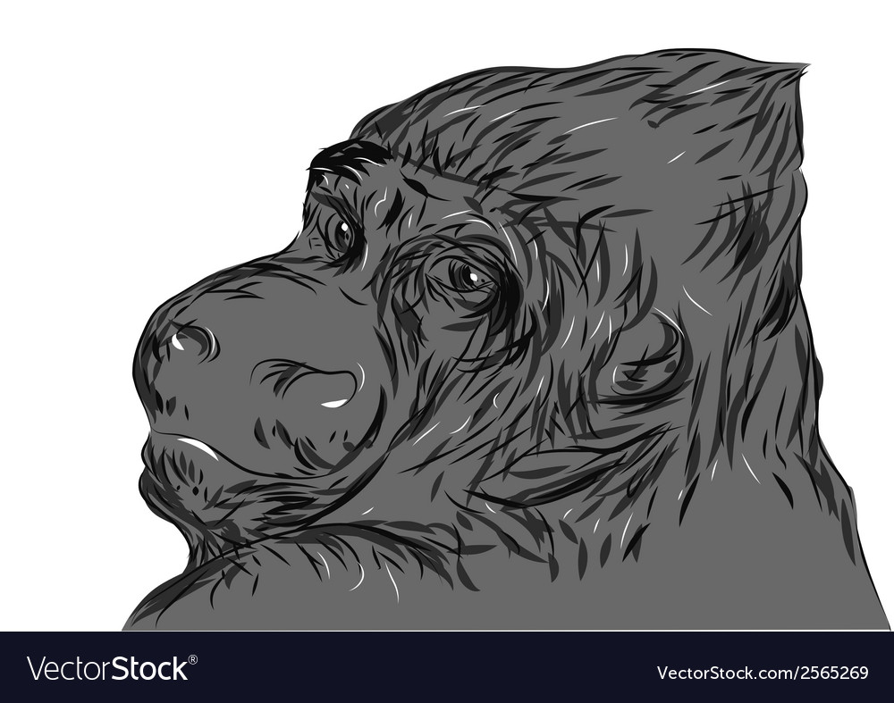 Gorilla vector | Price: 1 Credit (USD $1)