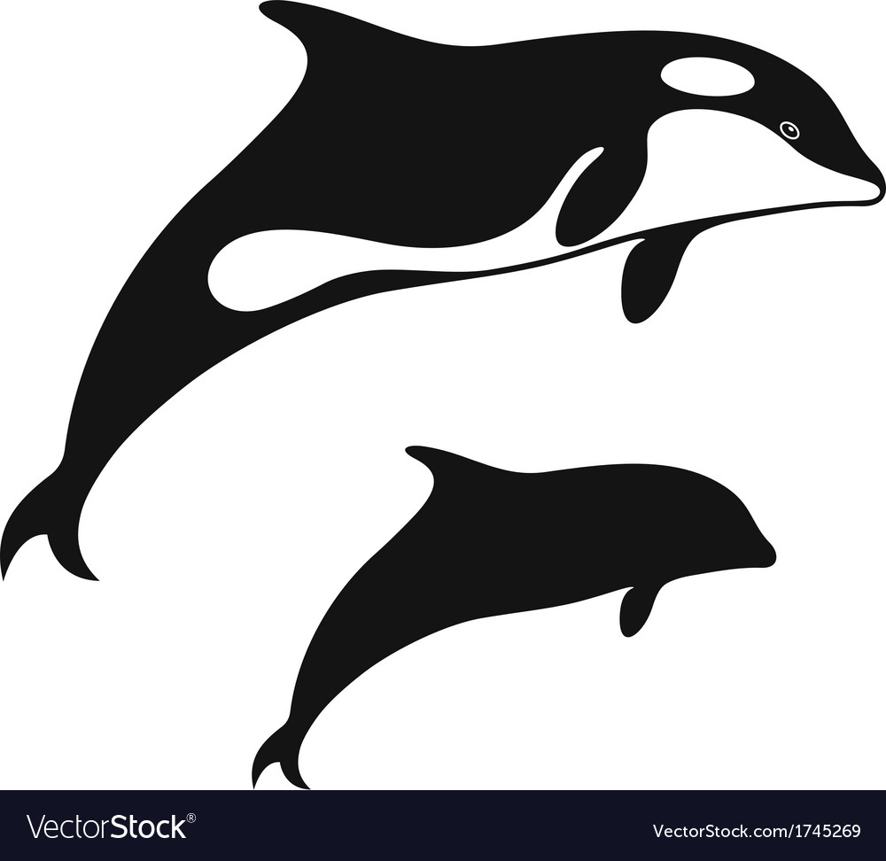 Killer whale vector | Price: 1 Credit (USD $1)