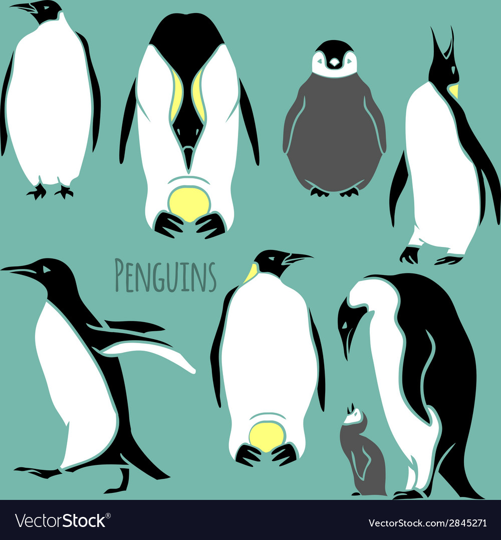Black and white penguin set vector | Price: 1 Credit (USD $1)