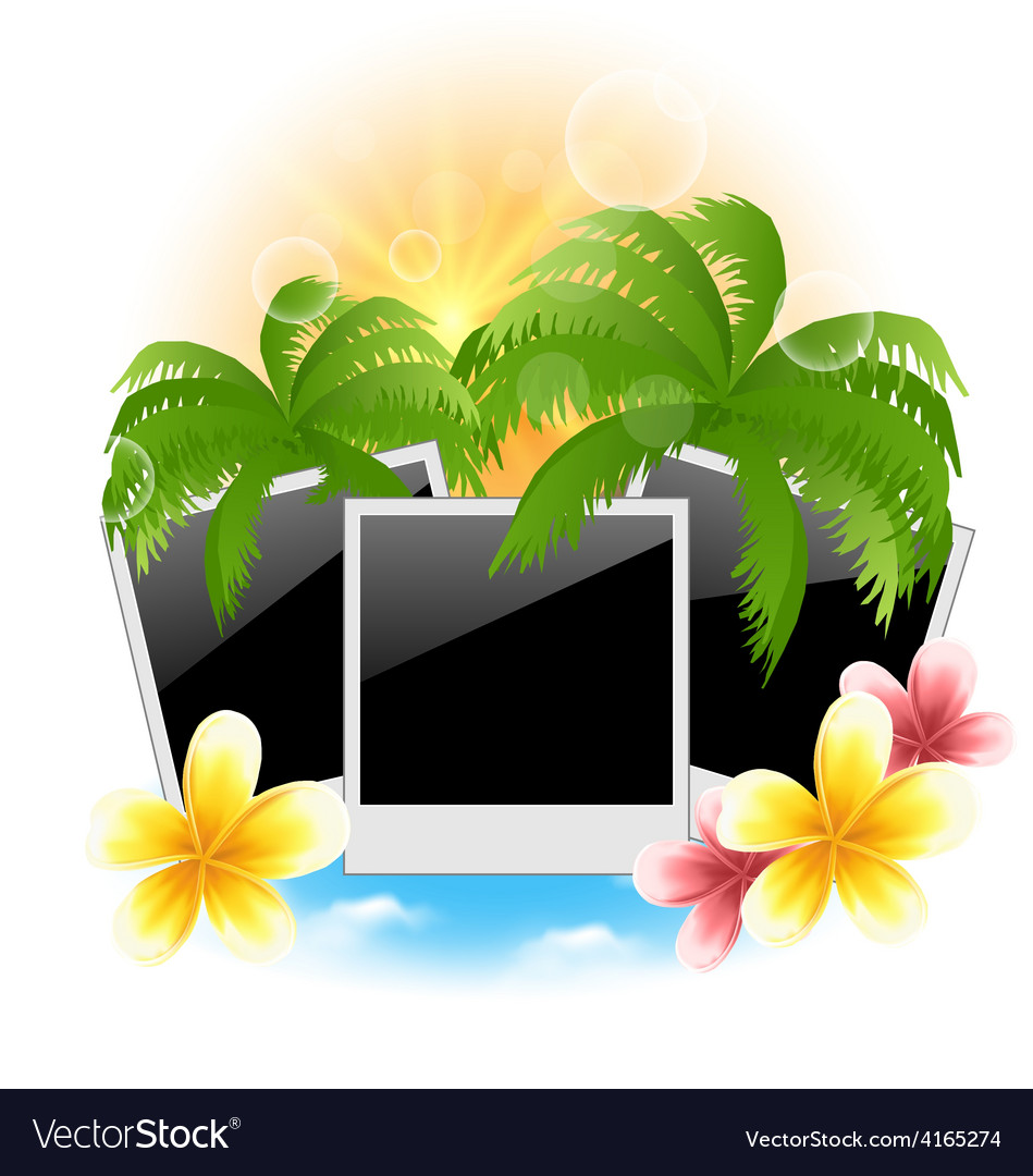 Set photo frame with palms flowers frangipani vector | Price: 1 Credit (USD $1)