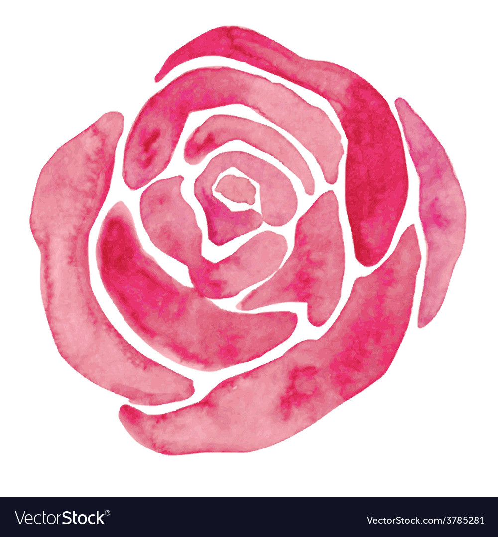 Watercolor rose vector | Price: 1 Credit (USD $1)