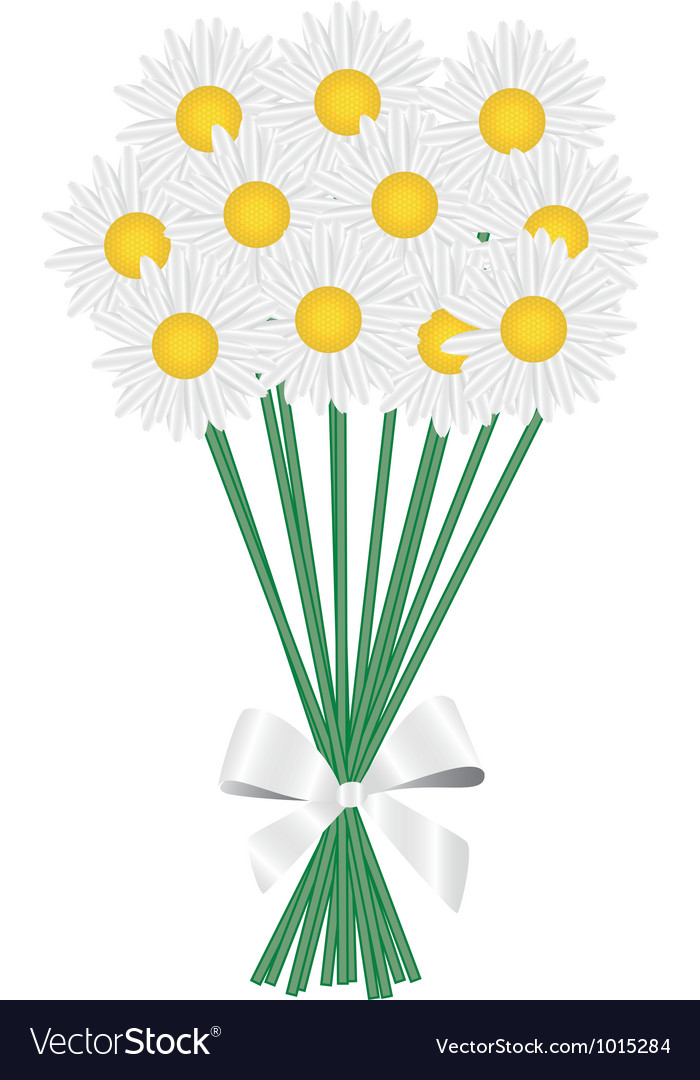 A posy of daisies tied with a white ribbon vector | Price: 1 Credit (USD $1)