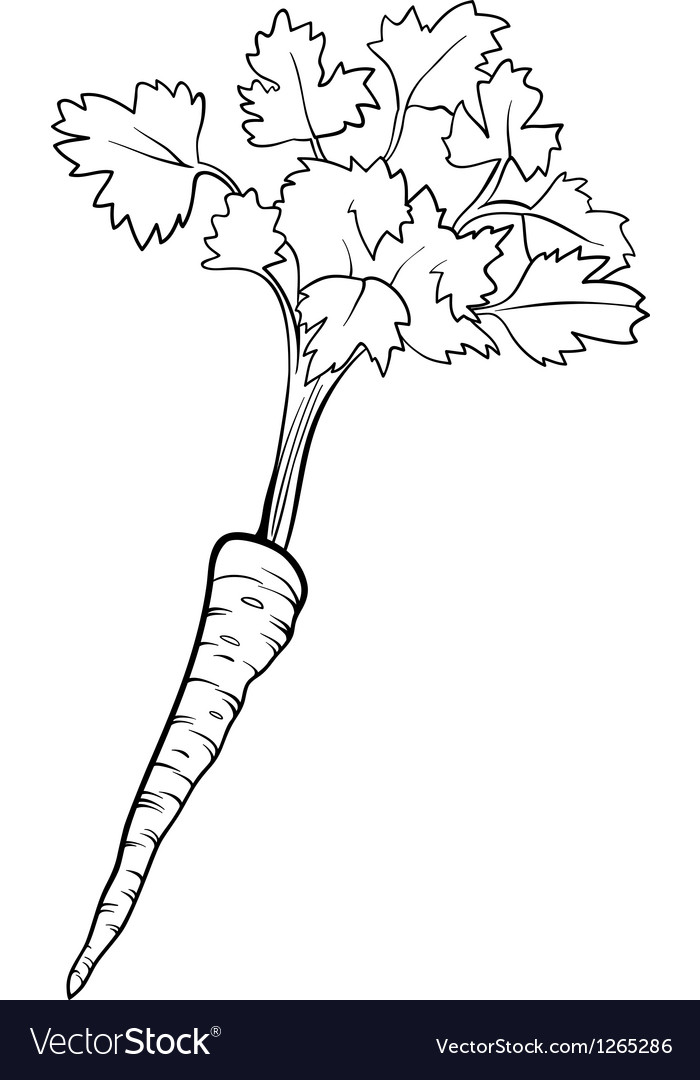Parsley vegetable cartoon for coloring book vector | Price: 1 Credit (USD $1)