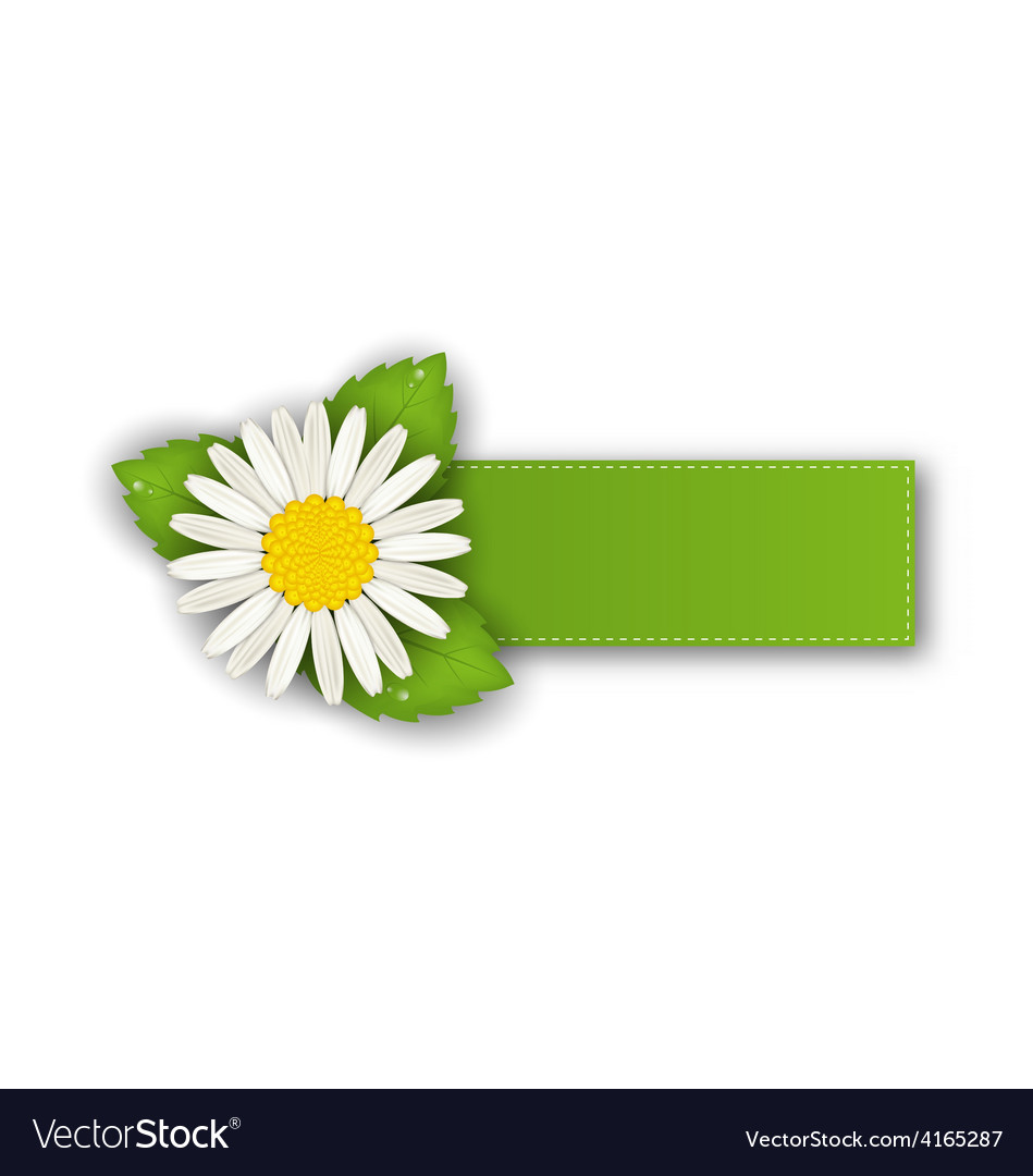 Label or offer sticker with flower daisy isolated vector | Price: 1 Credit (USD $1)