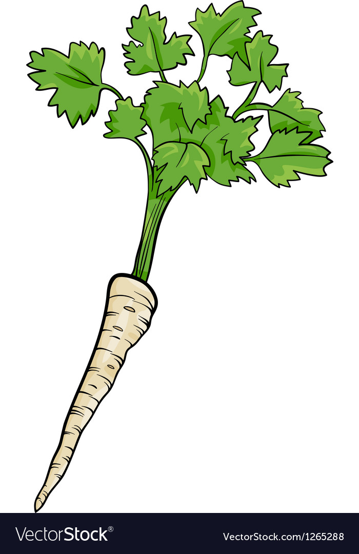 Parsley root vegetable cartoon vector | Price: 1 Credit (USD $1)