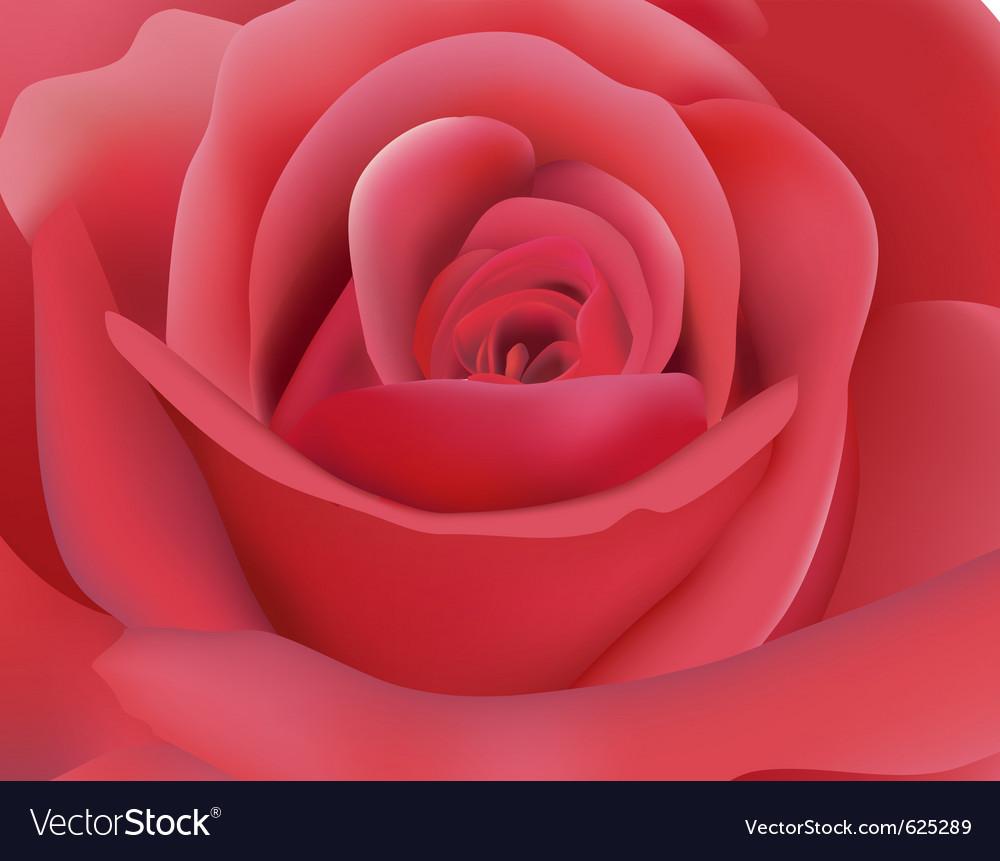 Dark pink rose vector | Price: 1 Credit (USD $1)