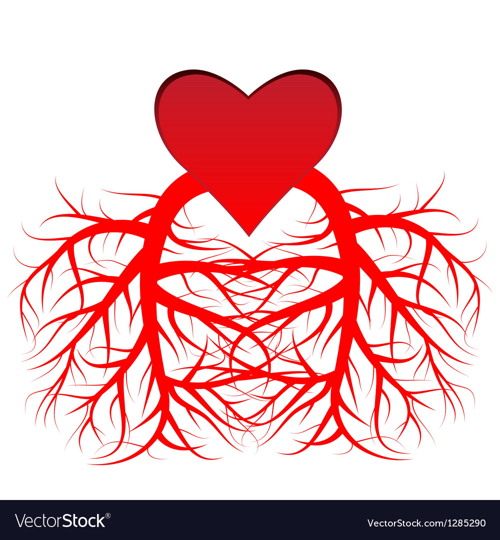 The heart and the veins vector | Price: 1 Credit (USD $1)