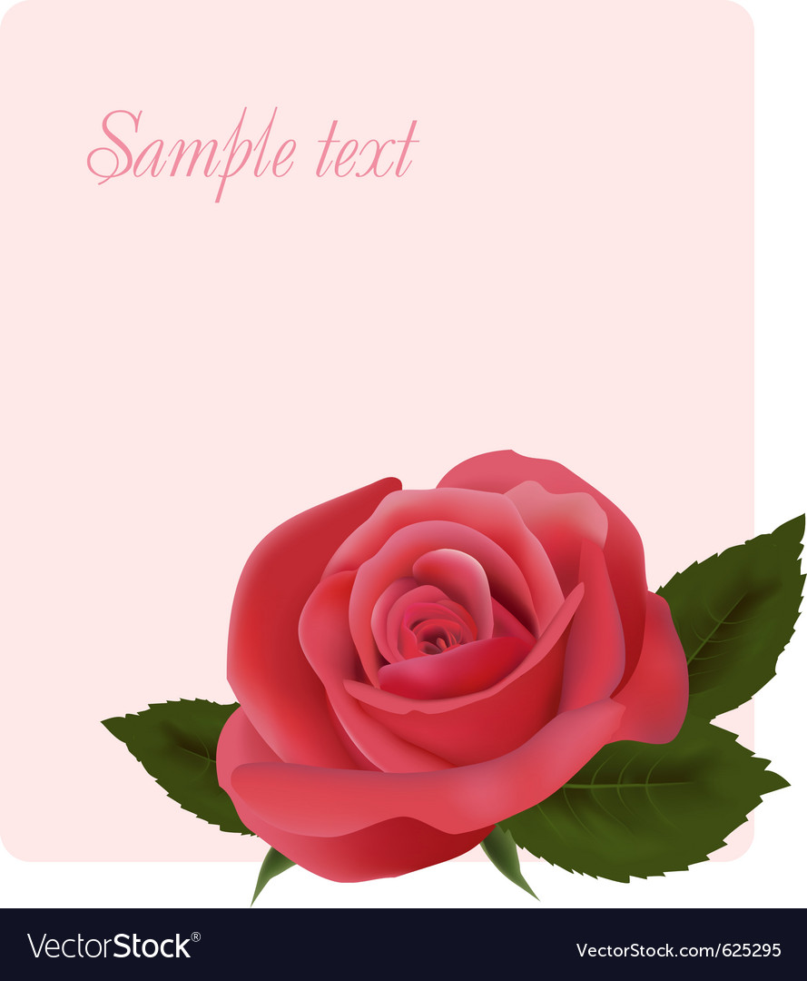 Card with beautiful pink rose vector | Price: 1 Credit (USD $1)