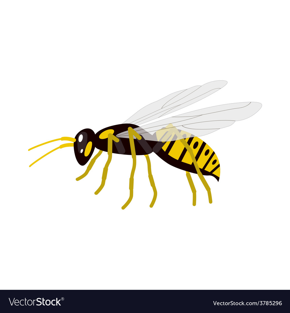 Wasp vector | Price: 1 Credit (USD $1)