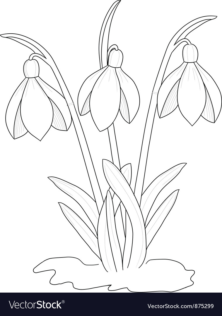 Snowdrops drawing vector | Price: 1 Credit (USD $1)