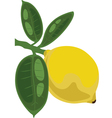 Lemon on a branch with leaves vector