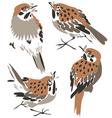 Sparrow or thrush vector