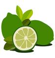 Lime fruit vector