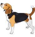Beagle dog vector