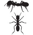 Silhouette ant vector