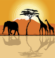 African landscape in sunset time vector