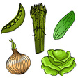 Set of five cute hand drawn vegetables vector