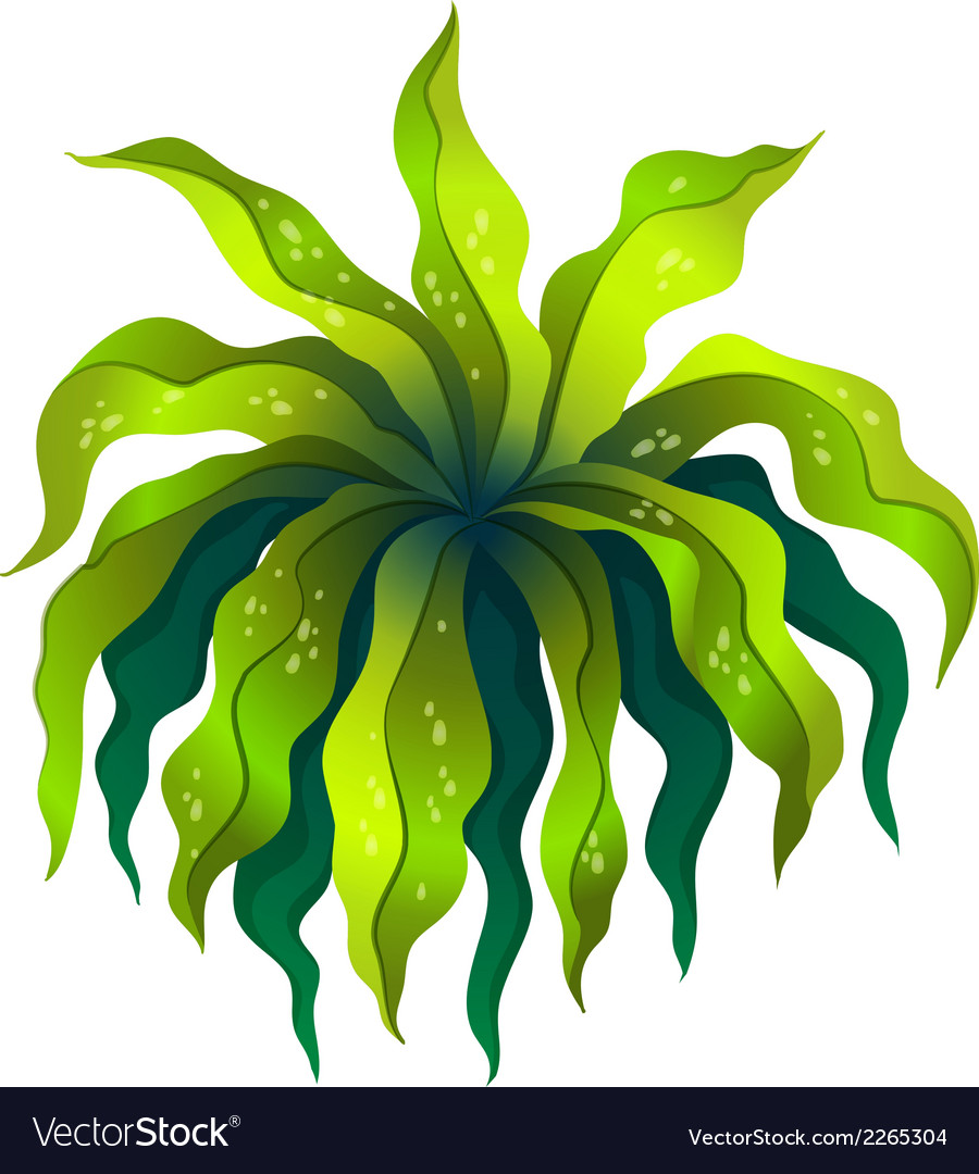 A topview of a green plant vector   Price: 1 Credit (USD $1)