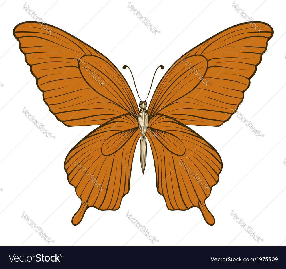 Vintage butterfly isolated on white background vector | Price: 1 Credit (USD $1)
