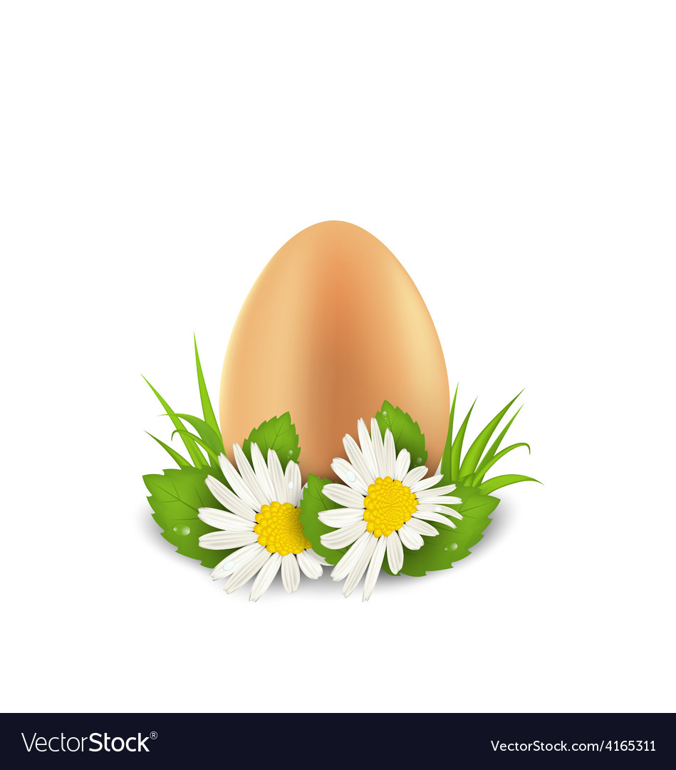 Traditional easter egg with flowers camomiles and vector | Price: 1 Credit (USD $1)