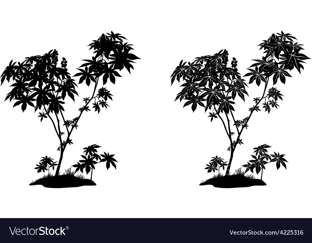 Castor plant contours and silhouette vector | Price: 1 Credit (USD $1)