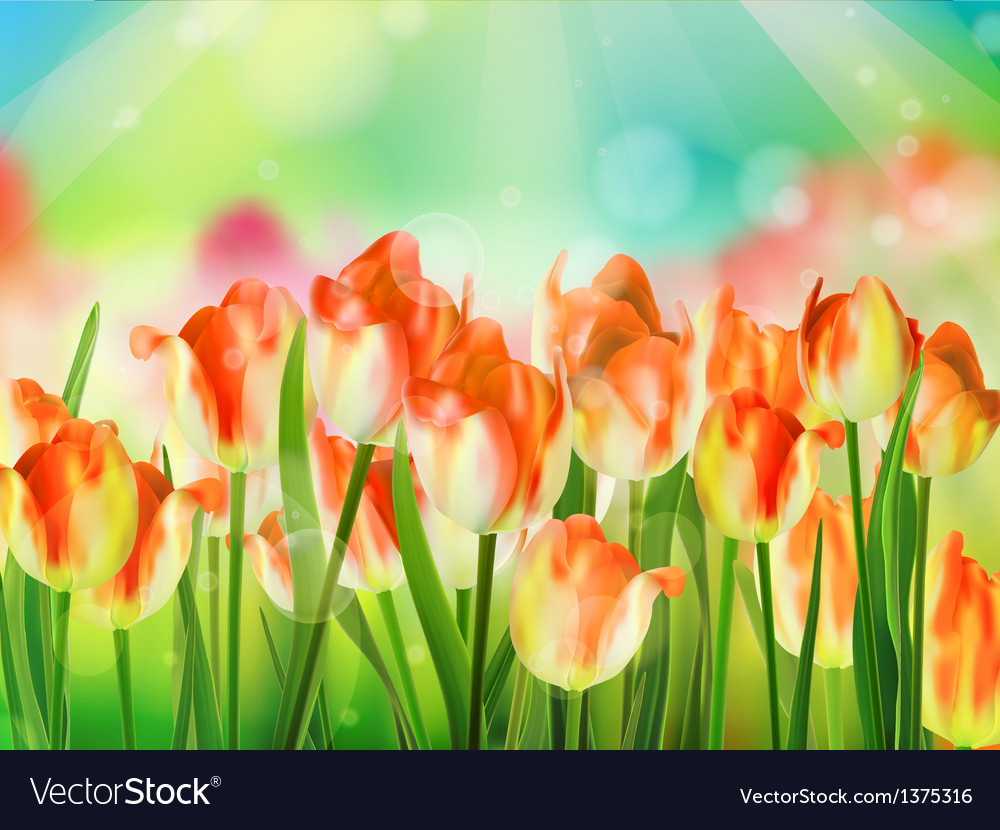Tulips garden with grass on blue sky eps 10 vector | Price: 1 Credit (USD $1)