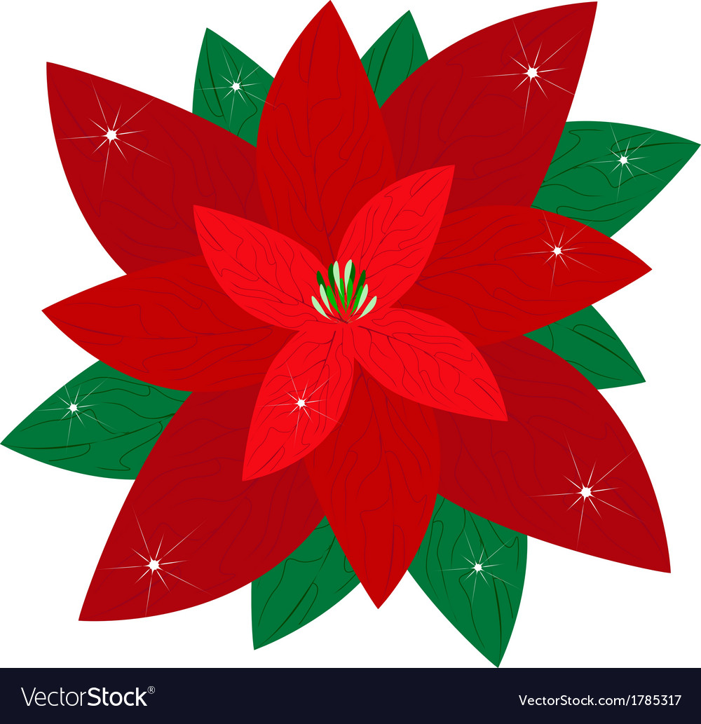Red christmas poinsettia flower vector | Price: 1 Credit (USD $1)