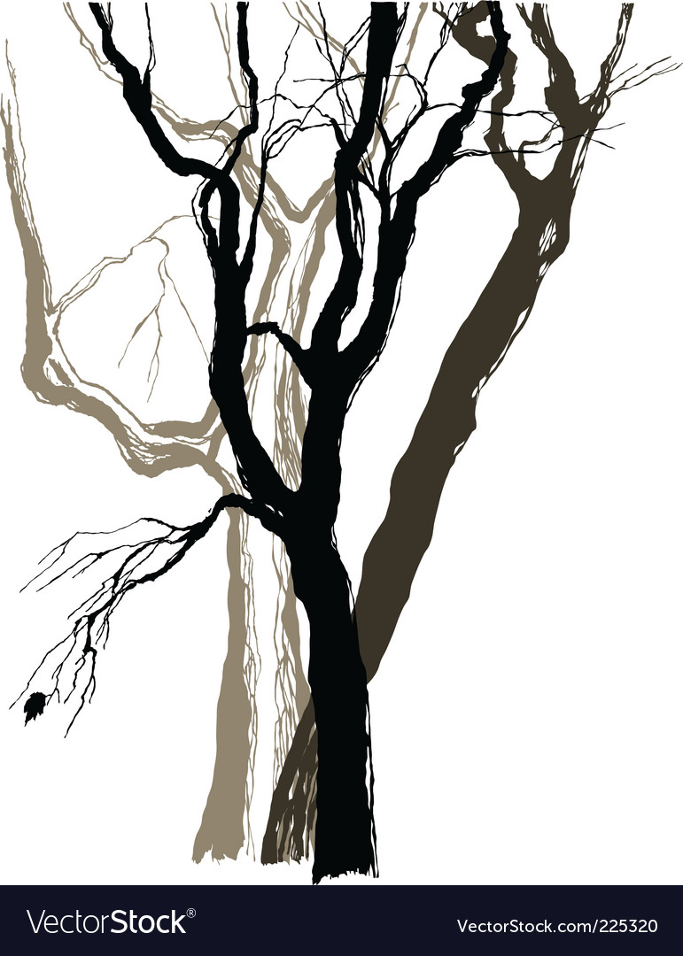 Old trees vector | Price: 1 Credit (USD $1)