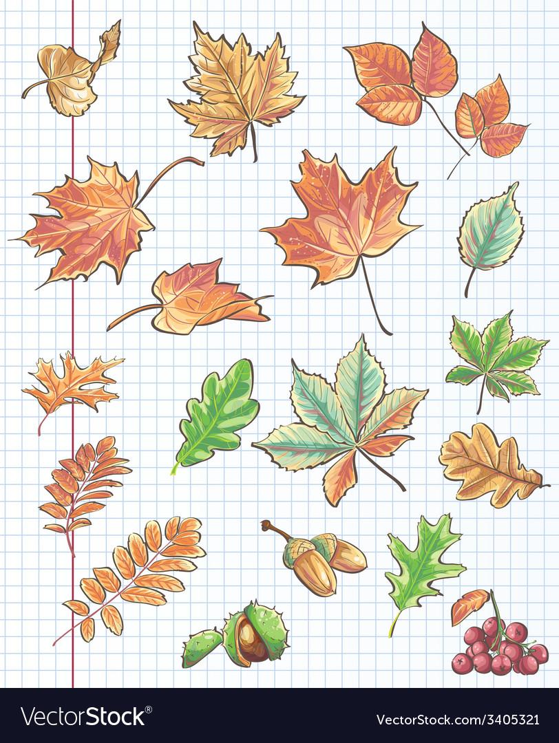 Et of autumn leaves chestnuts acorns and viburnum vector | Price: 1 Credit (USD $1)