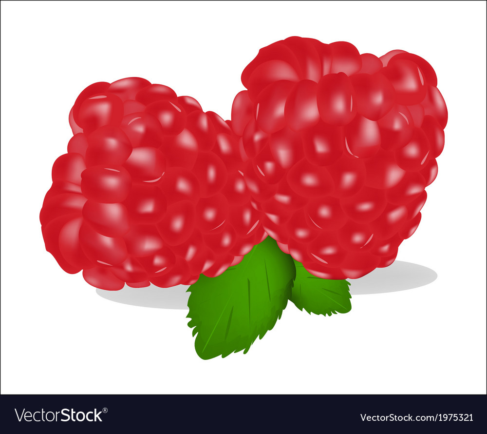 Fruits of raspberry on white background vector | Price: 1 Credit (USD $1)