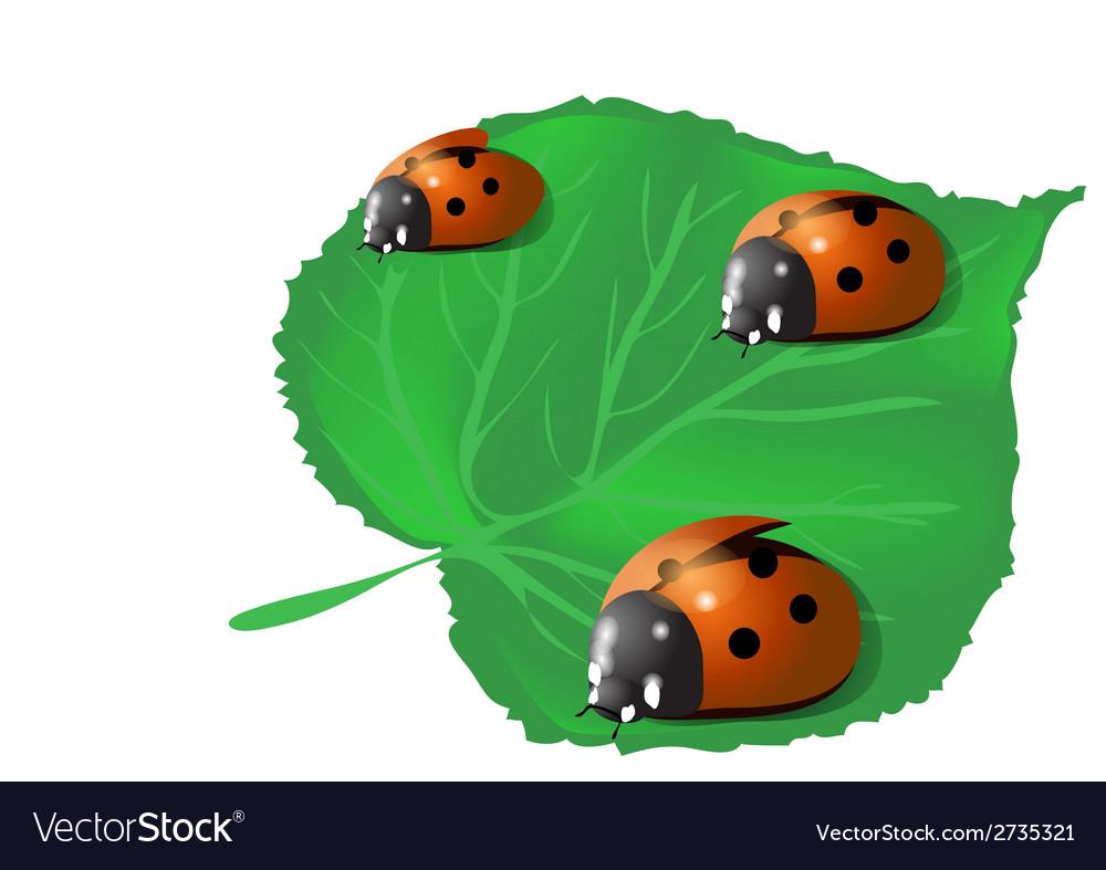 Three ladybugs vector | Price: 1 Credit (USD $1)