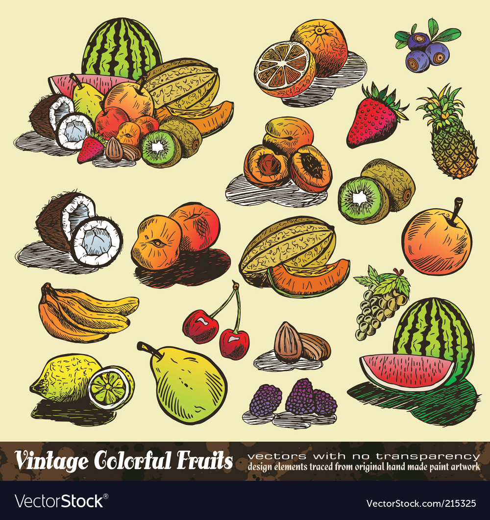 Vintage colorful fruits collection vector | Price: 3 Credit (USD $3)