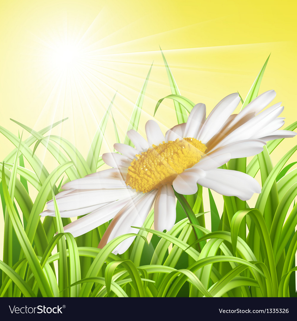 Green grass with daisy - summer background vector | Price: 1 Credit (USD $1)