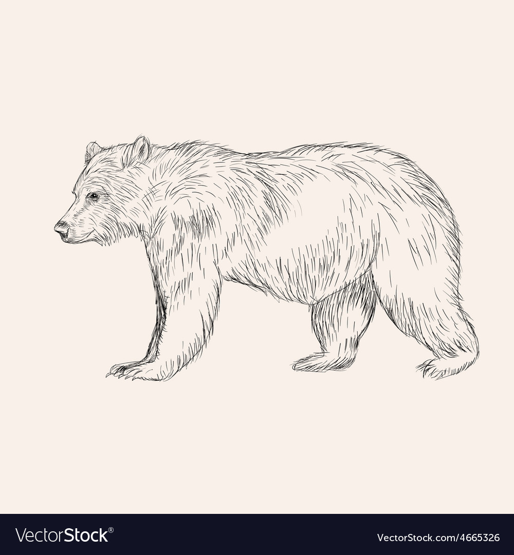 Sketch bear hand drawn isolated engraving doodle vector | Price: 1 Credit (USD $1)
