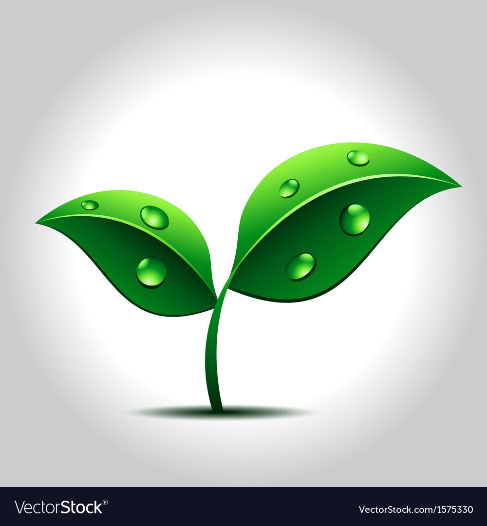 Green plant with water drops on leaves vector | Price: 1 Credit (USD $1)