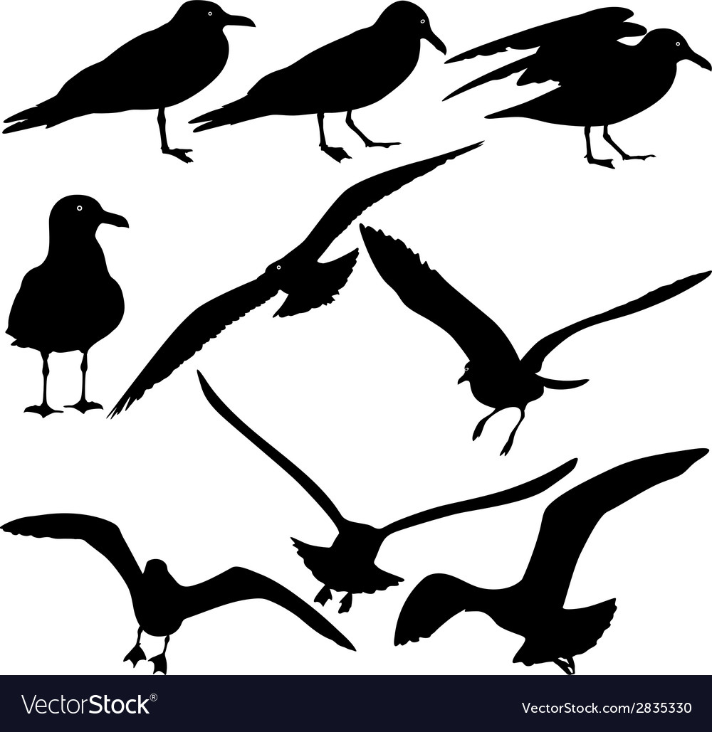 Set black silhouettes of seagulls on white vector | Price: 1 Credit (USD $1)