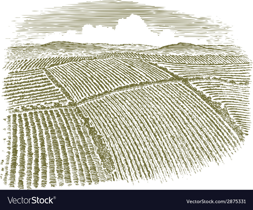 Woodcut aerial of field vector | Price: 1 Credit (USD $1)