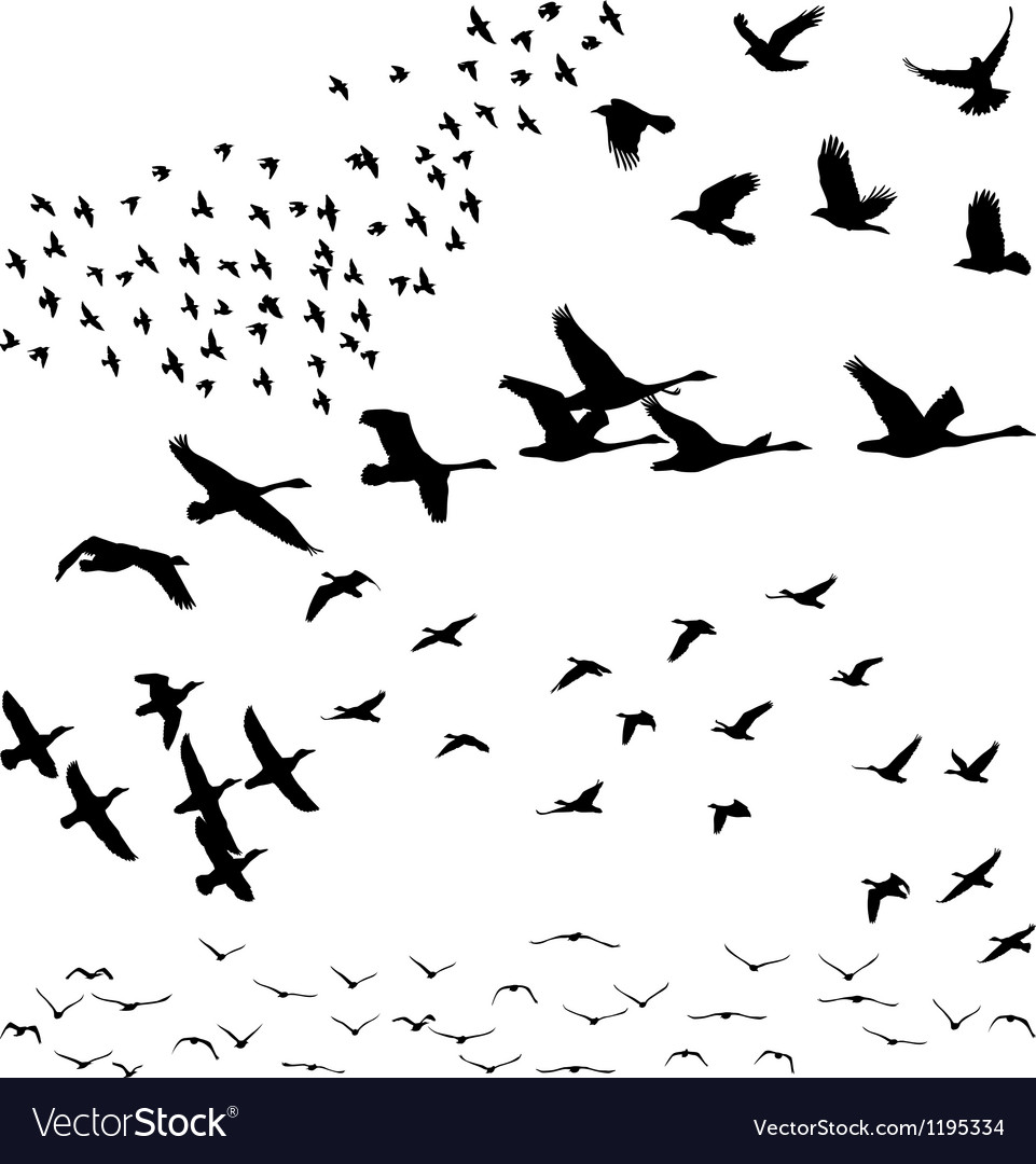 Silhouette a flock of birds vector | Price: 1 Credit (USD $1)