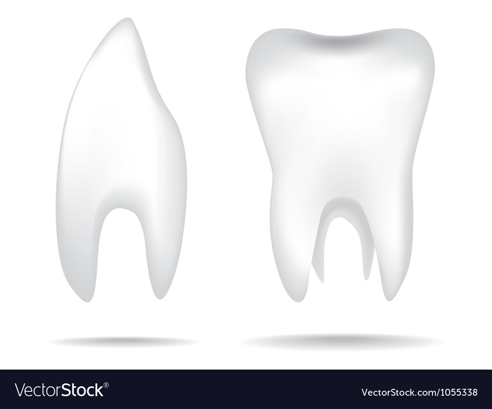 Teeth object vector | Price: 1 Credit (USD $1)