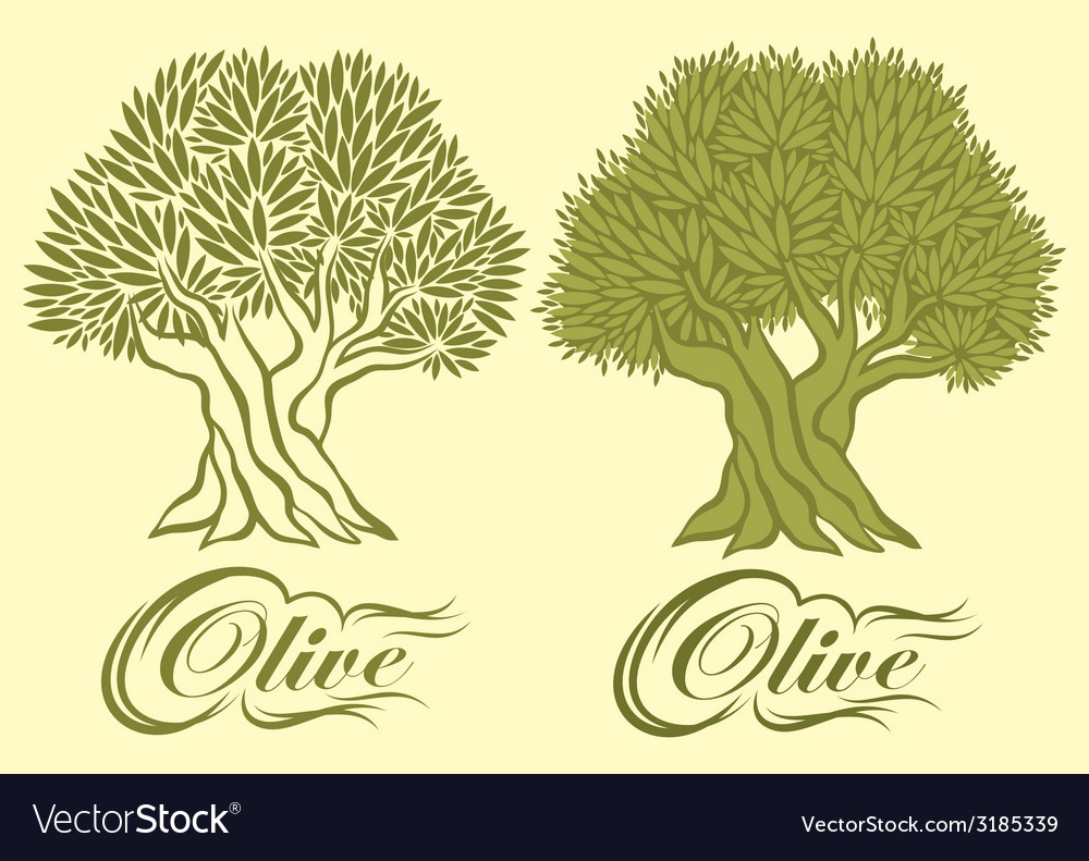 Pattern with an olive tree for packaging vector | Price: 1 Credit (USD $1)