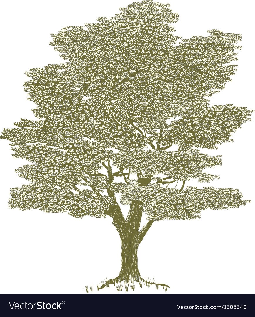 Woodcut solitary tree vector | Price: 1 Credit (USD $1)