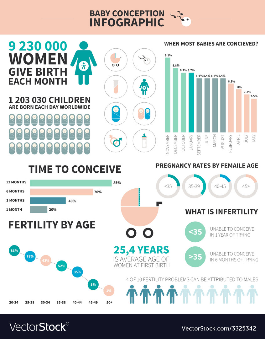 Baby conception infographic vector | Price: 1 Credit (USD $1)