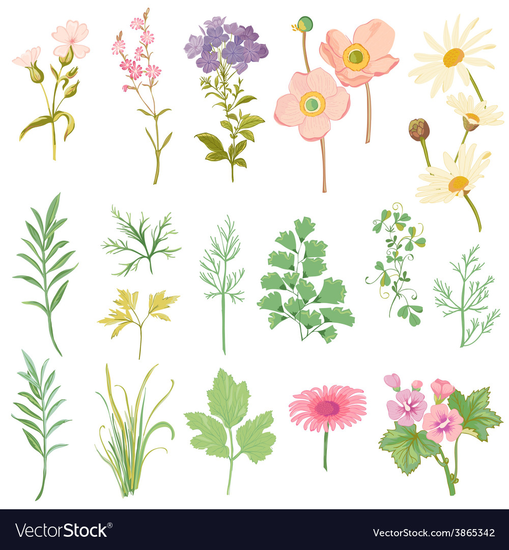 Set of flowers and herbs - hand drawn watercolor vector | Price: 1 Credit (USD $1)